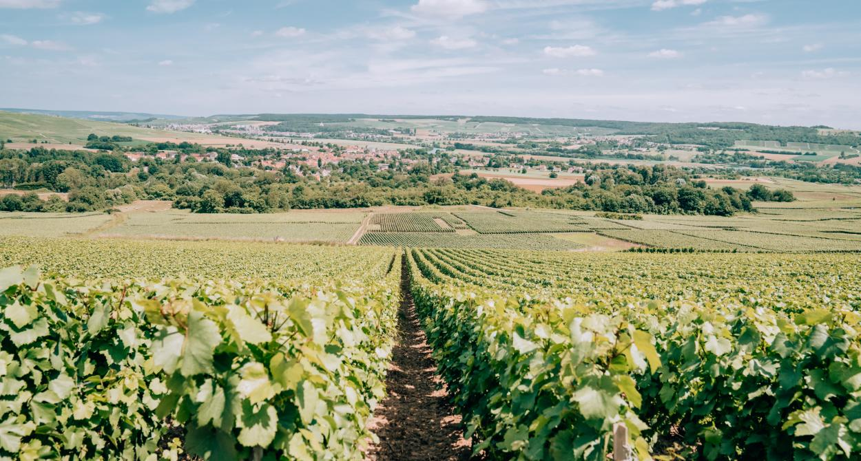 Vineyards_France ©Tourdelust